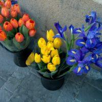 test Nexus 5 Appareil photo fleurs mode HDR 0001